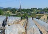진안군 돌풍피해 입은 수박농가 일손돕기 나서