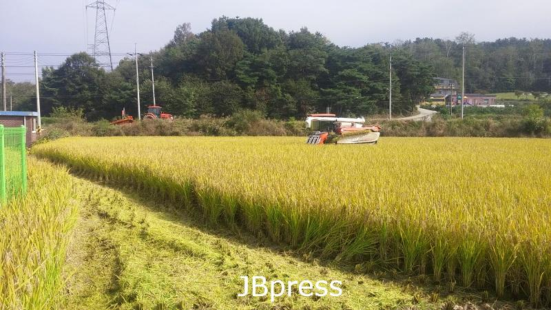1015 정읍시, 벼 적기 수확으로 최고품질 쌀 생산 '당부'2.jpg