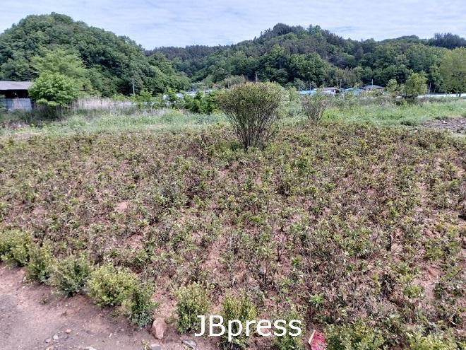 비봉면꽃밭사진1.jpg