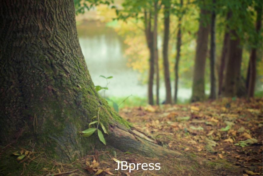 숲.jpg